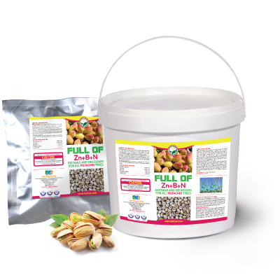 pistachi-fullof سبز محصول داتیس