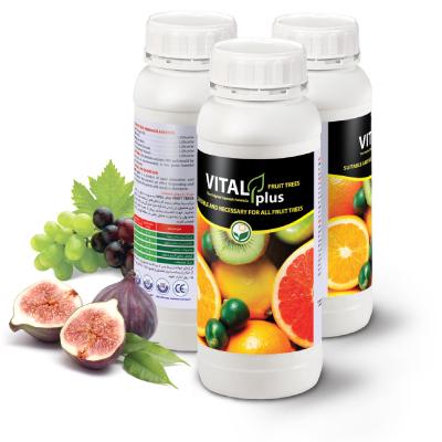 vitalplus-fruit سبز محصول داتیس