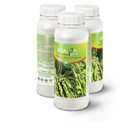 vitalplus-rice سبز محصول داتیس