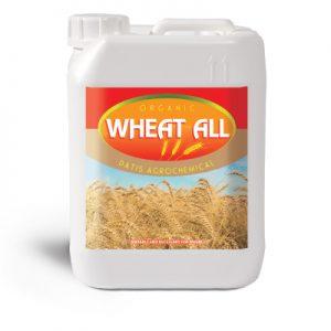 wheat-all سبز محصول داتیس